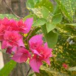 Rishikesh Frühling 2016 215
