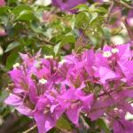 Rishikesh Frühling 2016 221