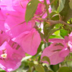 Rishikesh Frühling 2016 223